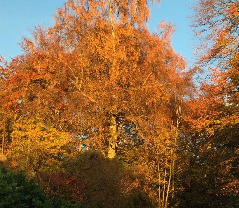 Autumn Nithbank Country Estate