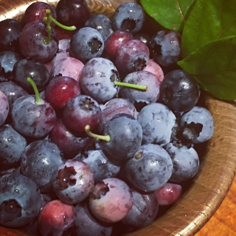 Blueberries from the Kitchen Garden at Nithbank